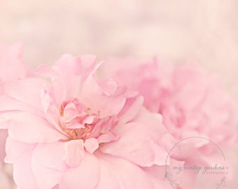 pretty in pink rose-flower photography -flower photo- cottage garden photography - Original fine art photography prints - FREE Shipping