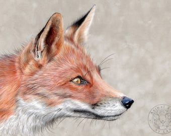 Red Fox art - Hand signed small fine art print - 'Monsieur Renard'