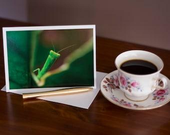 Praying Mantis - Any Occasion Card (5x7)