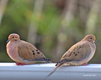 Two Doves 8x10 Photo Gift Ideas