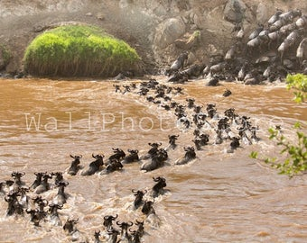Great Migration, Wildebeest Herd Migration, Animal Photography, Kenya Photography, African Wildlife, Wild Nature Photography, Wall Art Print