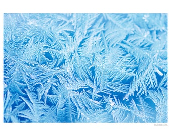 Nature Photography PRINT, Blue Frost, Wall Art