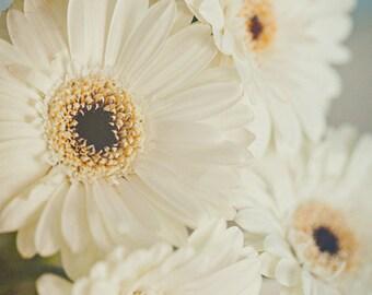Fine Art Print, Flower Photo, White Daisies, Daisy Wall Art, Gerber Daisy, Cottage Garden Art, Floral Decor, Nature Decor, Botanical Art,