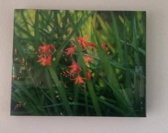 Orange Flower Photograph, Resin Photo Art, Resin Photography, 16x24, Shelf Decor, Art Decor, Office Decor, Wall Art