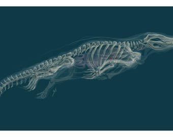 Ghost Crocodile - Giclee art print - anatomy - skeleton - art print - wall art - creature concept