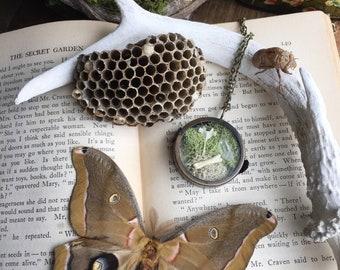 Natural History & Curiosity Necklace: Rabbit Vertebra, Raccoon Toe Bone, Tibetan Quartz