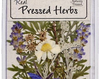 Pressed and Dried Herbs - 10 pieces