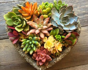 Heart Shaped Handcrafted  Succulent Planter