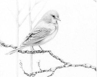 Print Bird Drawing Giclee Fine Art Print of my Original Pencil Drawing  Artwork Woodland Bird Art Print Minimalist Bird Art Print Drawing