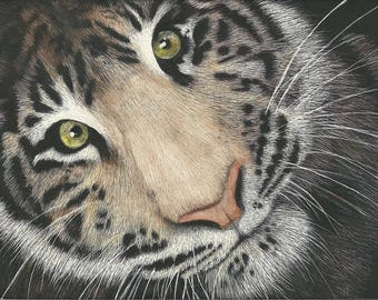 ATC ACEO Faces I Will Never See - Tiger Scratchboard Series Art Card