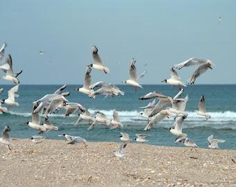 Seascape digital Seabirds Bird in flight Seagull photography Bird photograph Seagull Wall art Sea Photo Nature Beach birds