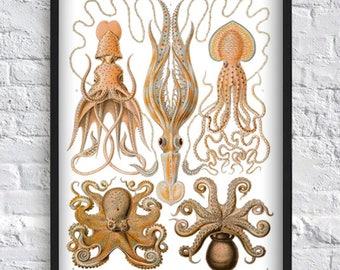 Oktopus - Octopus-Wand-Kunst - Druck Octopus Poster - Meer Tiere Druck - Marine Print - Wissenschaft Plakat - Vintage Darstellung - Bad