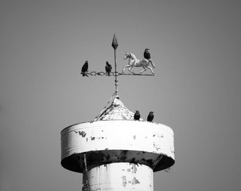 Black and White Country Photography, Old Barn with Weather Vane, Horse with Birds Rustic Chic