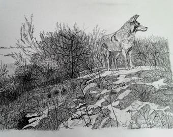 Pen & ink drawing - Lonesome Coyote
