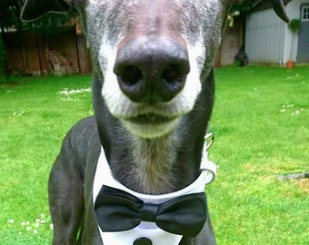 Dog Collar Bow Tie Dinner Suit Formal Wedding