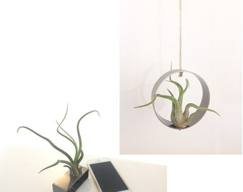 Air plants (Tillandsia, air plant) Duo on media stainless steel (rectangular and a hanging ring)