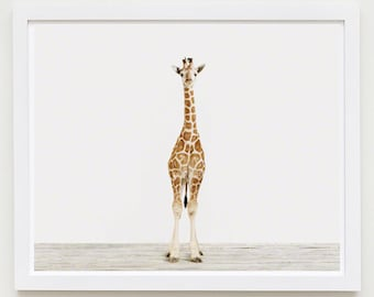 Baby Animal Nursery Art Print. Baby Giraffe No. 3. Safari Animal Wall Art. Animal Nursery Decor. Baby Animal Photo.
