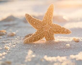 starfish art, starfish photography, beach cottage, bathroom decor, starfish large wall art, starfish print, sand and sun, beach photography