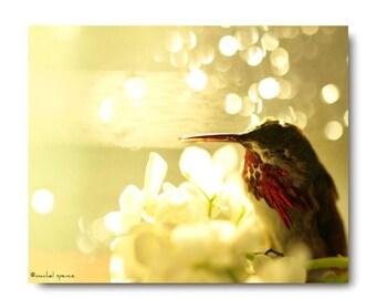 Tiny Love Sleeping Hummingbird Forest Scene Woodland Magical Bokeh Bird Photograph Home Decor Natural History