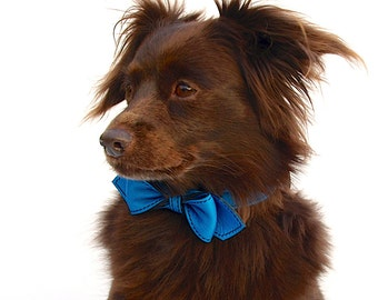 Peacock Blue Martini Bowtie Dog Collar
