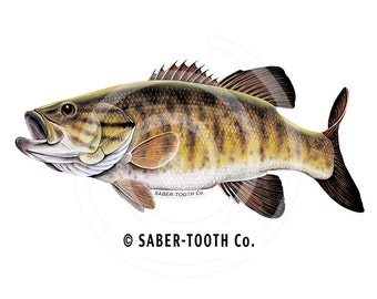 Smallmouth Bass Fish Decal Sticker