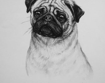 Pug dog fine art dog lover gift dog gift LE print from an original charcoal drawing available unmounted or mounted ready to frame