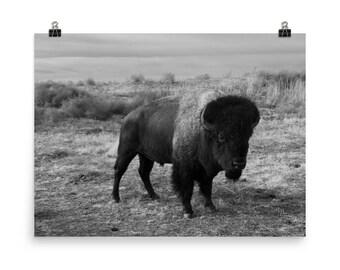 LowBeeTees Buffalo Print