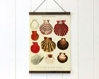 Pull Down Chart, Seashells Art, Educational Chart Diagram, Coastal Decor, Coastal Art, Cottage decor, 20x27