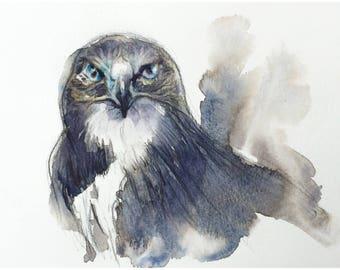 Hawk Eye - Original Watercolor Painting