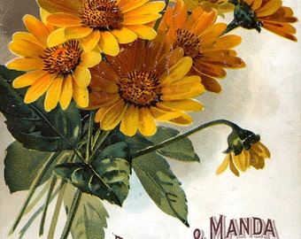 Pitcher and Manda Seed Company  Bright Colorful Print  Vintage Reproduction Print 11 x 17