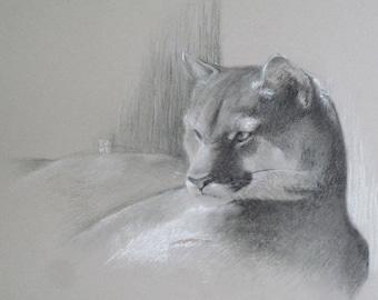 The rest of the Puma original charcoal