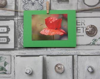 Birthday card, Poppy, Husband, Wife, Friend, Personalised, Blank, Greeting,
