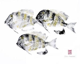 8 x 10 Hawaiian Manini Tang Reef Fish Print Gyotaku in Black Mat