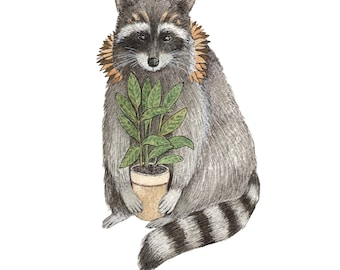 Critters and Plants: The Raccoon // 5x7 Art Print // Forest Illustration