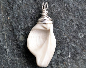 FREE SHIPPING, Island shell fragment, pendant, necklace, silver wire