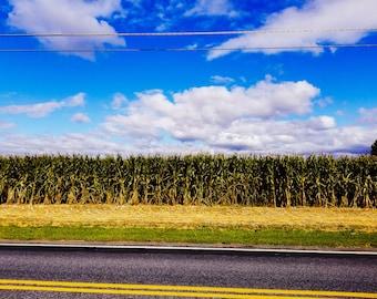 Quiet Cornfields of Manheim, Pennsylvania