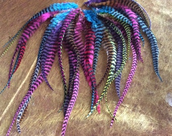 1 purchased = 1 free feathers pegs multicolored roosters grizzly