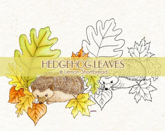 Digital Stamp Hedgehog Leaves, Digi Download Autumn Fall, Cute Animals, Spring Nature, Garden Leaf, Clip Art, Coloring Page, Scrapbooking