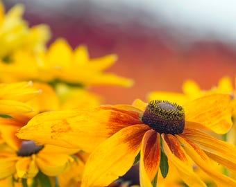 Orange Flower Closeup Photography, Personalized Print