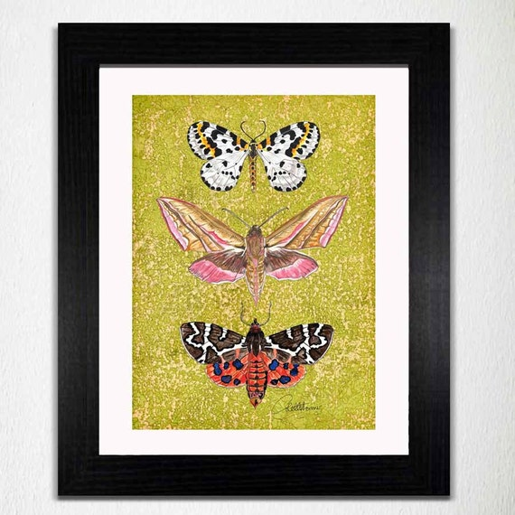 Moth Wall Art Moth Wall Decor Moth Painting Butterfly Art Moth