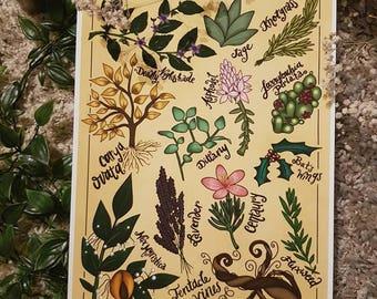 Art Print: Herbology I