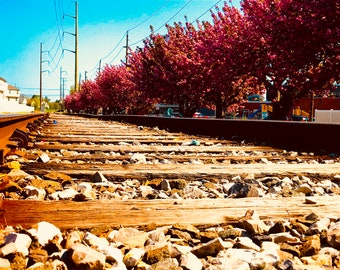 Railroad Trees