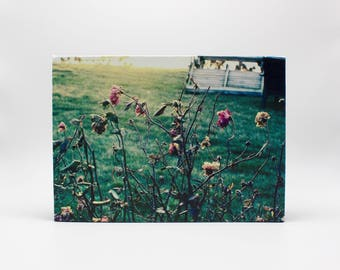 Bay Flowers Photograph on Canvas
