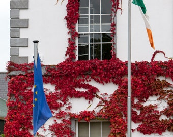 Travel Photography, Ireland, Window Art