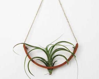 Hanging Air Plant Cradle (tm) - Natural TerraCotta