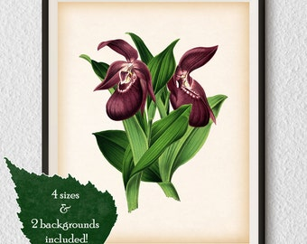 Flower print, Botanical wall art, Flower illustration, Digital download print, Home wall decor, Flower print vintage, Antique print, #51