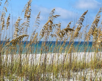 Pensacola Beach, Florida Beach Photograph // Beach Landscape // Sea Oats Print // Beach Picture