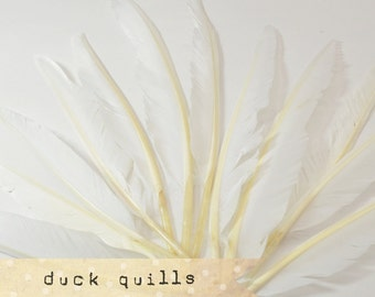 10pcs - WHITE - Large Duck Quills - Stiff loose feathers