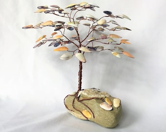Coquina Shell Gem Tree on Beach Stone with Exposed Quartz