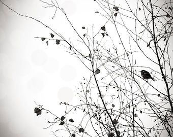 black and white prints bird photography decor bird in a tree print winter monochrome print nature photography floral print nursery decor